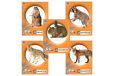 Champion Critter Series Target - Paper 2ea. Of 5 Animals 10-pk.